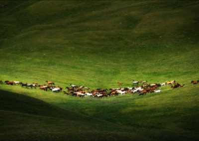 Herd,Of,Wild,Horses,Near,A,Glacier,High,In,The